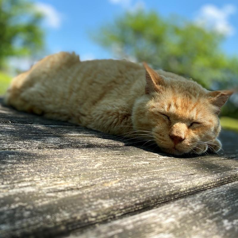 滝下広場の猫