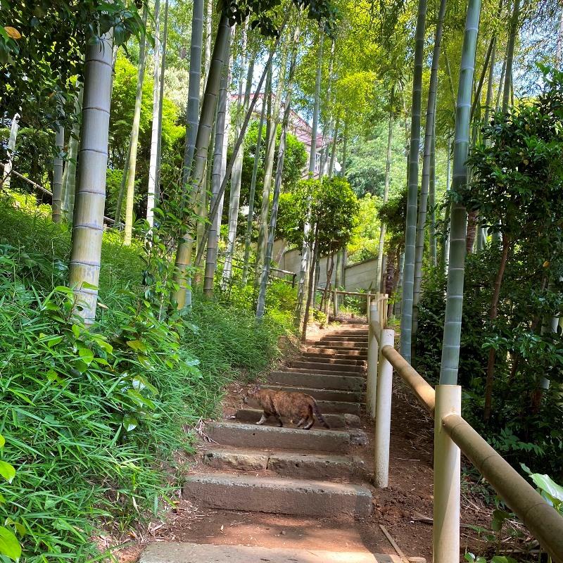 旧村川別荘の階段