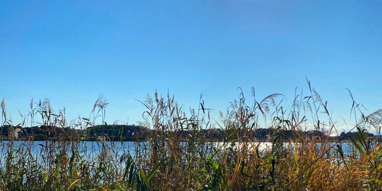 手賀沼の風景