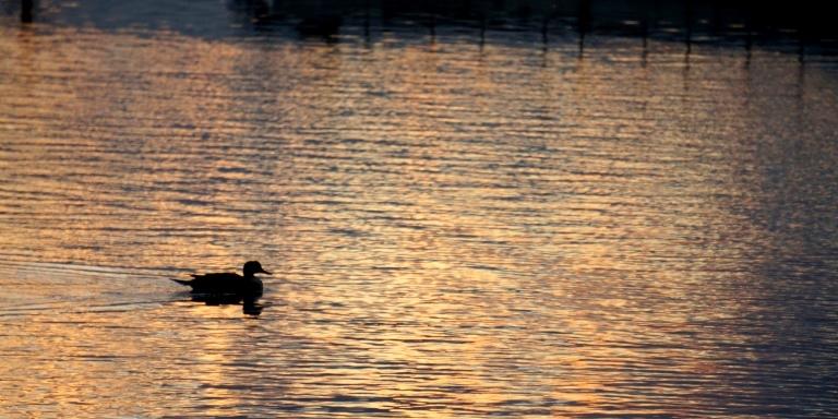 手賀沼公園夕陽の中の鳥