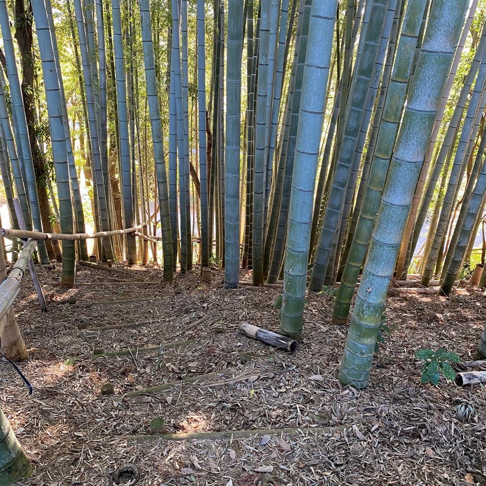 ハケの道に続く竹林の階段
