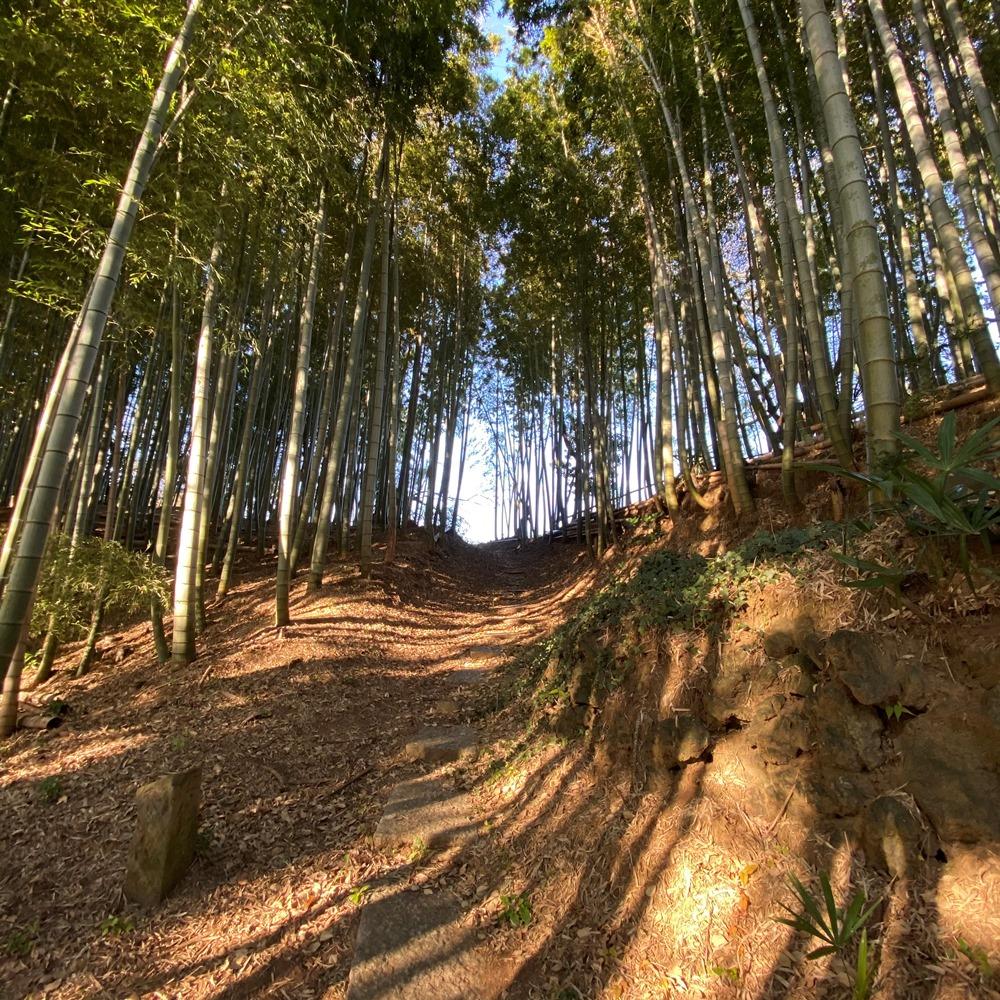 竹林への階段