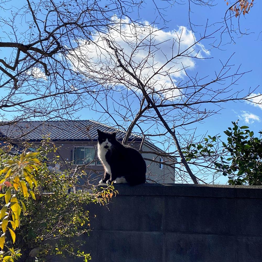 本土寺参道に居た猫