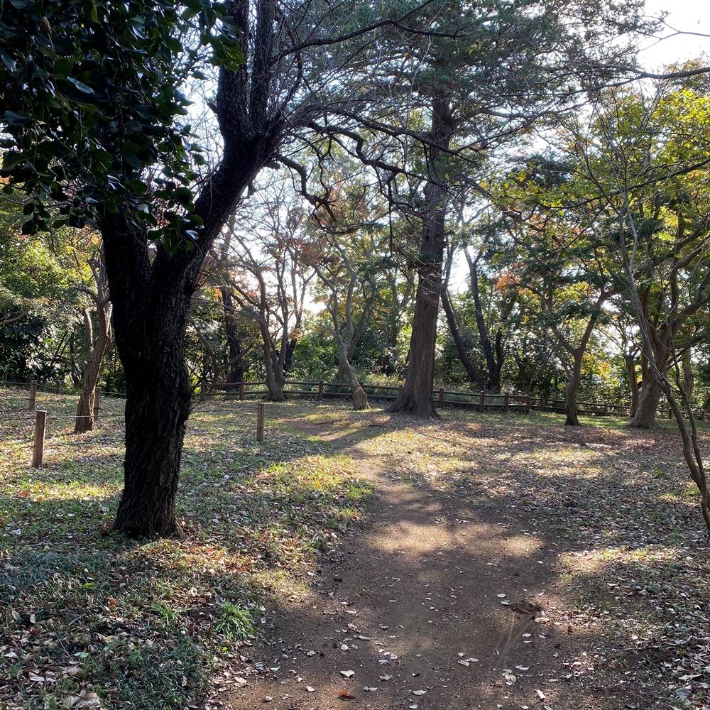 島久別荘跡の木々