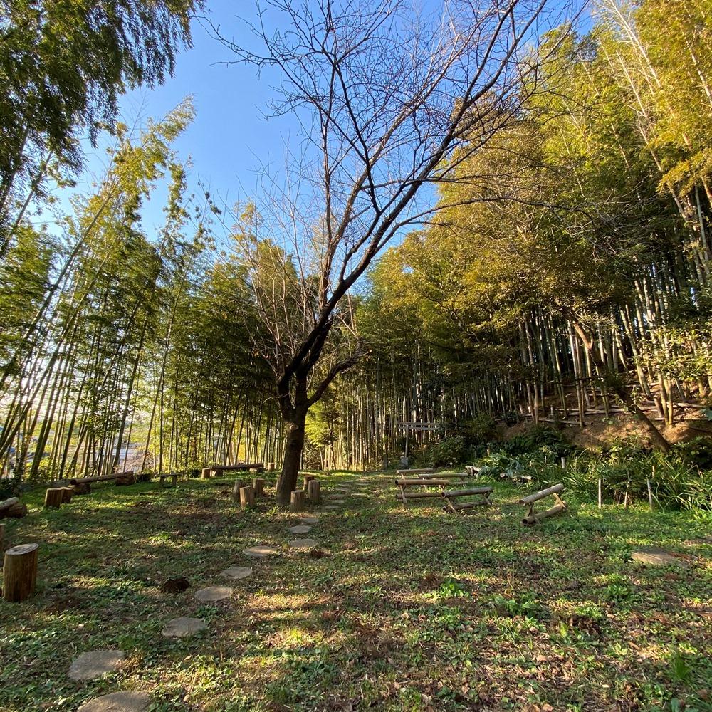 境内の竹や切り株の椅子