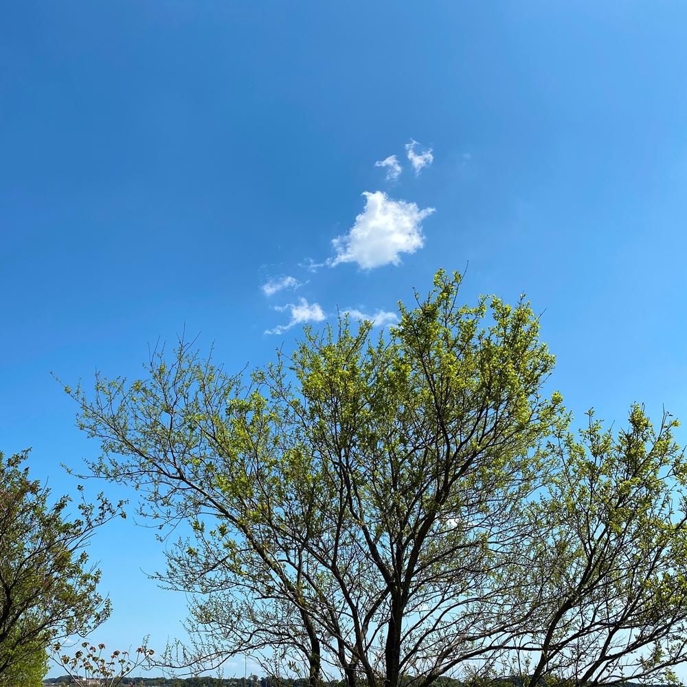ある晴れた春の午後