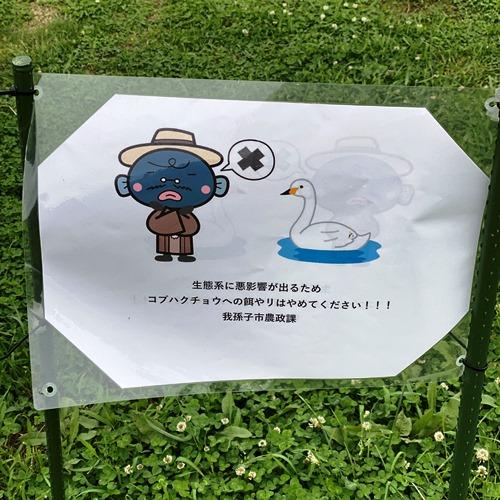 コブハクチョウへの餌付け禁止のプレート