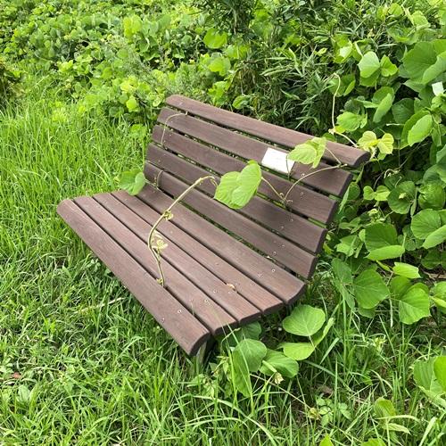 ベンチと植物
