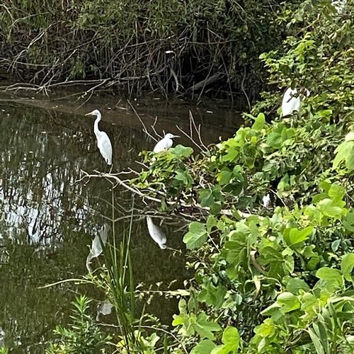 手賀沼の鳥たち