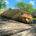 手賀沼の猫たち