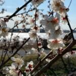 手賀沼植物2月