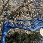 あけぼの山農業公園3月