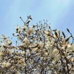 手賀沼の草花3月